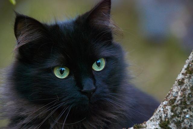 Czarny Kot Dobry Czy Zły Wybór Kobiecy Białystok