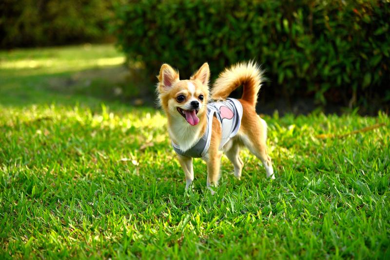 cdfa56b7ad322 Czy ubranka dla psów to po prostu moda, czy może raczej konieczność? Wiele  osób twierdzi, że są one jedynie fanaberią właścicieli, którzy traktują  swojego ...